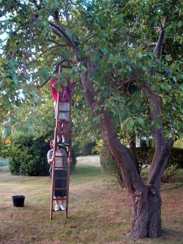 up a ladder